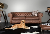 Chesterfield Sofa Bennet Bild 98