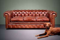 Chesterfield Sofa William Bild 98